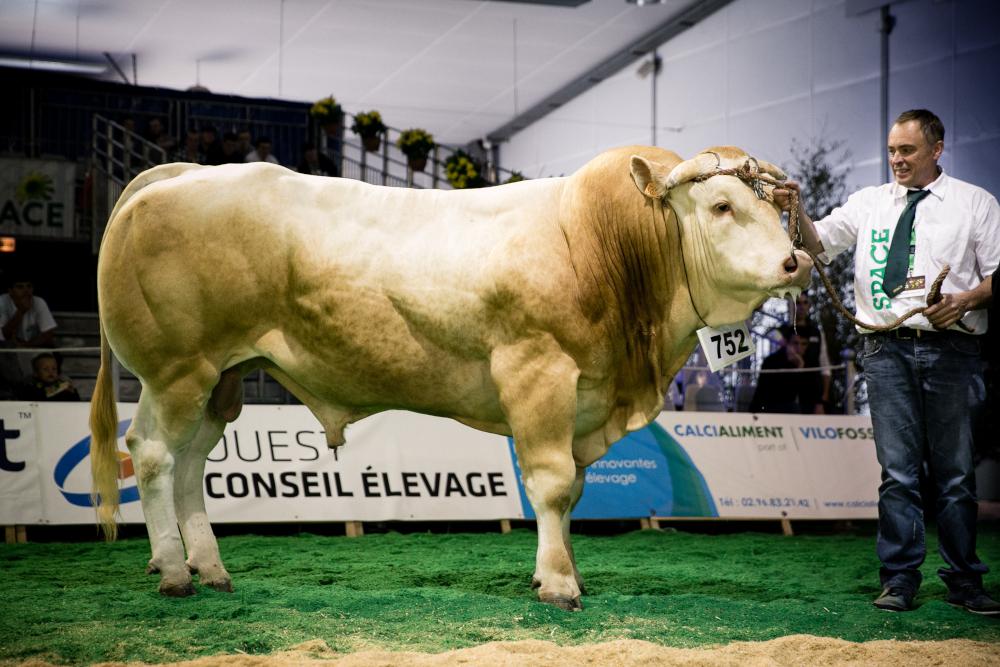 Concours Interrégional Blonde Aquitaine