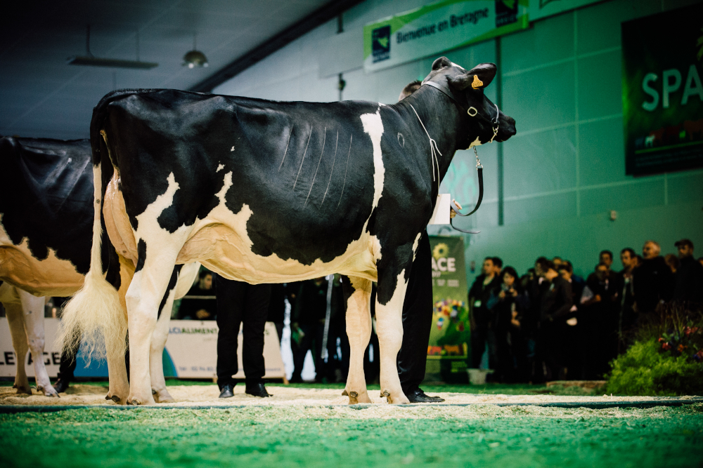 Challenge France Prim Holstein