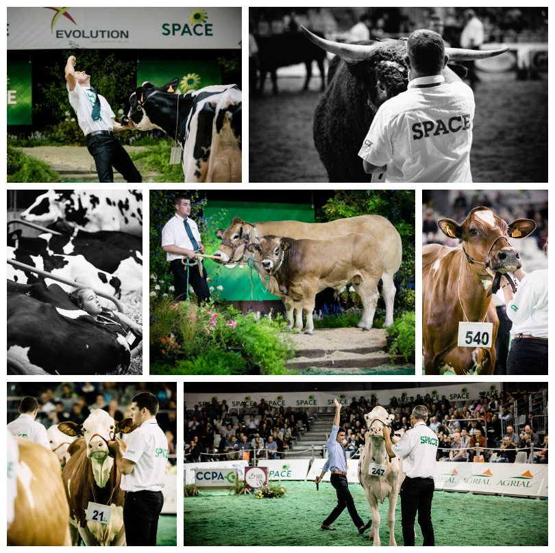 Animal competitions at SPACE